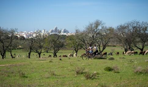 dois ciclistas a pedalar no campo com ovelhas
